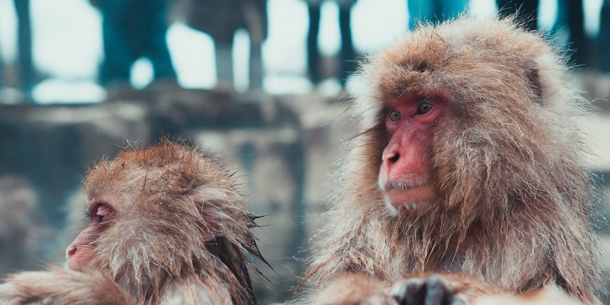 Are Humans Good or Evil? A Primatologist Looks to Our Ancestors for the Answer