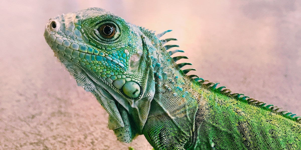 """How to Calm Your Fearful """"Lizard Brain"""" and Live Life to the Fullest"""