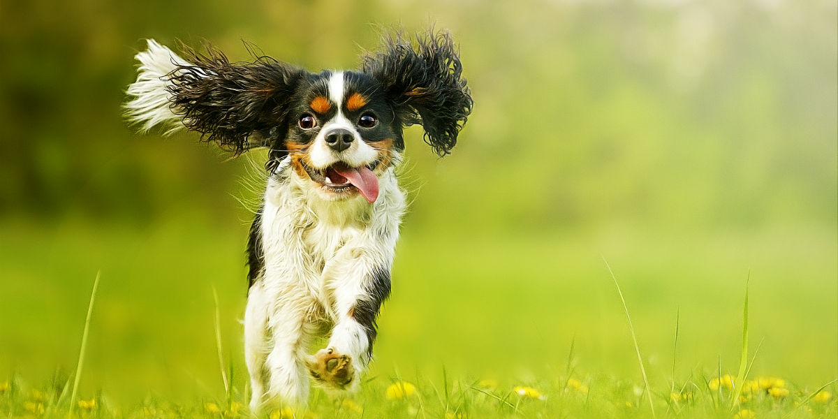 How Your Dog Can Help You Lose Those Last Five Pounds