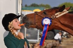 horse-934534_1280