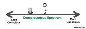consciousness-spectrum