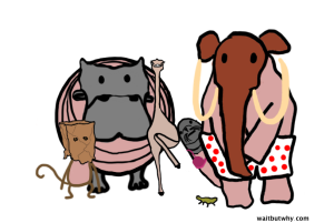 animals-embarrassed-600x402