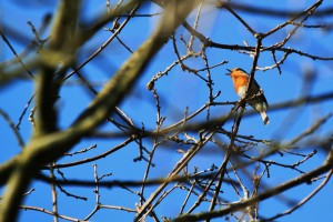 bird-287109_1920