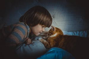 cat-1045180_1920