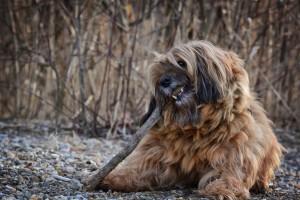 dog-1210110_1920
